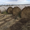 Balansa / Sub Clover with upto 10% Rye Hay 5x4 Rolls For Sale