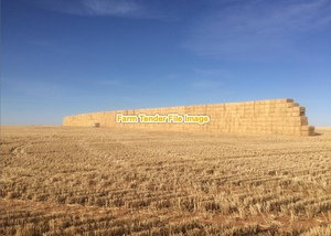 Barley Header Tailings 500 mt