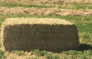 Wanted Rye and Clover Hay in 8x4x3 Bales