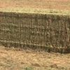 Vetch Hay ( New Season ) 8x4x3 -500 x 600 KG Approx Bales & Shedded