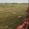 Small Square Bales of Rye & Clover in 21 lot packs