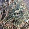 380 Bales of quality Vetch Hay, 8x4x3