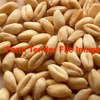 SFW1 / Feed Wheat For Sale - Off the Header Now or Delivered on a spread? - good tonnage!