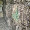 Last Seasons Vetch Hay 640kg 8x4x3 Bales