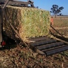 Canola Hay done right can be up there with Vetch Hay