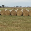 Oaten / Rye Hay Rolls For Sale Ex Farm - Feed tested - No rain