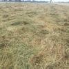 Small Square LOW SUGAR Horse Hay.