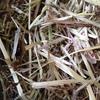 Clover & Ryegrass hay