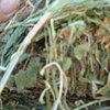 Clover hay  top quality