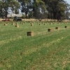 Q31 Lucerne Small Square Bales For Sale