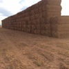 Vetch Hay For Sale in 8x4x3's - 280 Bales Available - No Tops!!