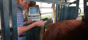 The importance of recording the performance of your cattle: part one