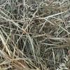 Organic/Biodynamic certified Oaten/Peas/Lucerne Hay