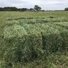 1000 SMALL BALES LUCERNE HAY @ 12.00 inc GST