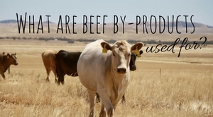 What are beef by-products used for? - The Princess Royal Blog