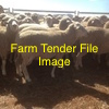 WANTED - Ewes 1500 - 2000. Must be sound breeding ewes, and guaranteed sound mouth. In truck loads. Preferably in South West VIC