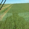 In conversion Organic oaten/ rye