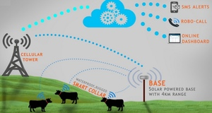 Report says $1.3 billion benefit for graziers implementing remote cattle monitoring
