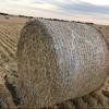 Barley straw 5x4 round bales