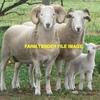 Wiltshires Ewes, Rams & Wethers (Full Herd)