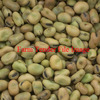 F1, 2 & 3 Faba Beans Wanted