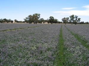 Industry collaboration for major Lucerne project