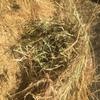 Quality Pasture Clover/Rye Hay