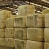 Woolgrowers vote for 1.5 percent in WoolPoll
