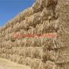 500mt Barley Straw 500-550kg 8x4x3 Bales