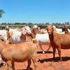 Free Range  Goats Wanted COD