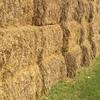 Oaten & Barley Straw for sale in 8/4/3's