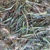 Top Grade Oaten Hay For Sale in 8x4x3's