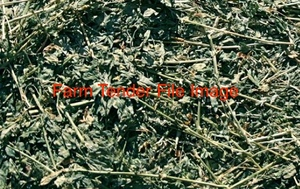 2nd Cut Lucerne Hay For Sale
