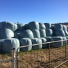 Silage (Feed Tested)
