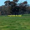 Wanted 600-1200 Acres in or around Roma Area