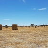 Oaten Hay 8x4x3 -2,000 x 500 KG Approx Bales West Of Natimuk