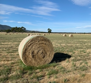 Rye and Clover hay