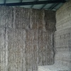 100 Bales of Old Season Balansa Clover Hay Shedded