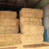 Wheat straw Gilgandra nsw