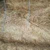 Ryegrass Hay  650  Bales 8x4x3 FT