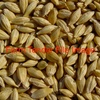Wanted Double or R-Train of Feed Barley Delivered