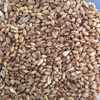 Wheat ASW 500 tons