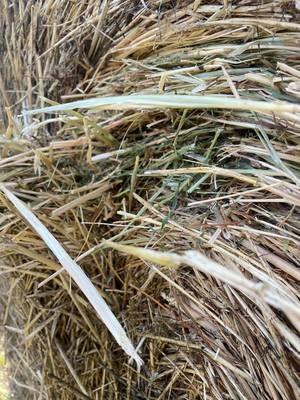 Italian Rye Grass Hay