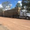 Barley Straw 8x4x3 520kg Bales