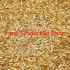 25mt Cleaned Triticale For Sale
