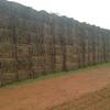 600 Bales of Vetch Hay