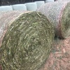 Canola  Wrapped Silage  Hay 5x4 - 500 x 500 KG Approx Rolls