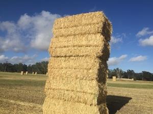 Oaten hay large squares