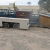Boontech 3 way auto draft sheep handler with Trailer