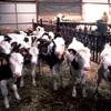 Mad Cow disease identified on Scottish Farm